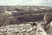 Camel Photos - Holy Land: Jerusalem by Granger