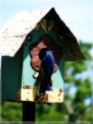 Feeding Birds Pyrography Posters - Home Again Poster by Laura Brightwood