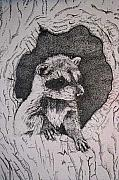 Raccoon Drawings - Home by Debra Sandstrom