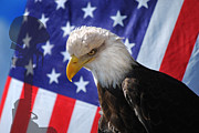 Eagle Digital Art Posters - Home of the Brave Poster by Adele Moscaritolo