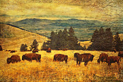 Buffalo Metal Prints - Home on the Range Metal Print by Lianne Schneider