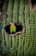 Lovebird Photos - Home Sweet Home  by Saija  Lehtonen