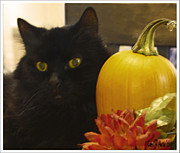 Family Member Posters - Homegrown Cats and Pumpkins Poster by Carol F Austin