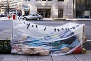 Problem Prints - Homeless Person In Washington Dc Print by Mark Williamson