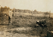 1910s Candid Framed Prints - Homer Hunt Tending Pigs, Rockcastle Framed Print by Everett