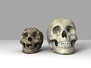 Relatives Framed Prints - Homo Floresiensis Skull Framed Print by Equinox Graphics