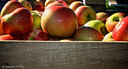 Minnesota Grown Metal Prints - Honey Crisp Metal Print by Susan Herber