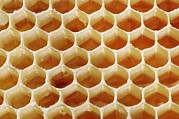 Hexagons Acrylic Prints - Honey In Wax Honeycomb Cells Acrylic Print by Cordelia Molloy