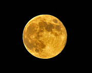 Full Moon Prints - Honey Moon Close Up Print by Al Powell Photography USA