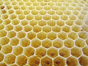 Hexagons Photos - Honeycomb Wax Cells by Cordelia Molloy