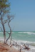 Scenery Photos - Honeymoon Island Driftwood by Peter  McIntosh