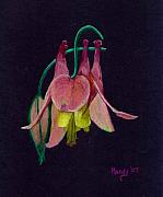 Flower Pastels - Honeysuckle by Mendy Pedersen