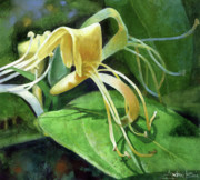 Watercolor Photo Metal Prints - Honeysuckle Shade Metal Print by Andrew King