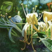 Botanical Painting Prints - Honeysuckle Sun Print by Andrew King