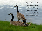 Wildlife Christian Art Posters - Honker Family Psalm 91 Poster by Cindy Wright
