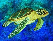 Hawaii Sea Turtle Paintings - Honolulu Honu by Patti  Bean