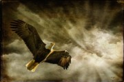 Eagle In Clouds Prints - Honor Bound Print by Lois Bryan