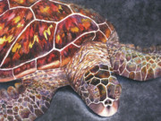 Hawaii Sea Turtle Paintings - HONU Il by Kerri Ligatich