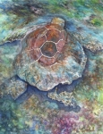 Sea Turtle Paintings - Honu Ill by Kerri Ligatich