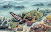 Hawaii Sea Turtle Paintings - Honu in Midflight by Manupupule