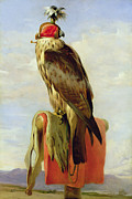 Bird Paintings - Hooded Falcon by Sir Edwin Landseer