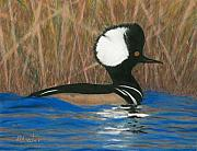 Bird Art - Hooded Merganser by Brent Ander