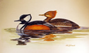 Ducks Paintings - Hooded Merganzers by Raymond Edmonds