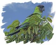 Parakeet Digital Art Posters - Hooded Parakeet Poster by Larry Linton