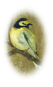Warbler Paintings - Hooded Warbler by Elise Boam
