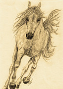 Gypsy Drawings Prints - Hoof Beats Sepia Print by Teresa Vecere