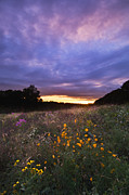 Indiana Flowers Framed Prints - Hoosier Sunset - D007743 Framed Print by Daniel Dempster