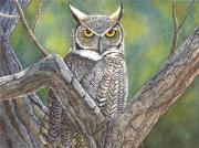 Great Paintings - Hooter by Catherine G McElroy