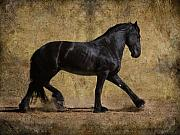 Friesian Photos - Hooves of Thunder by Jean Hildebrant
