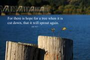 Bible Verse Photos - Hope For A Tree by James Eddy
