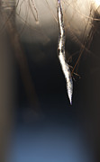 Nature Icicle Prints - Hope in the Darkness Print by Sue OConnor