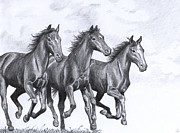 Wild Horses Drawings Framed Prints - Hope never dies Framed Print by Kate Black