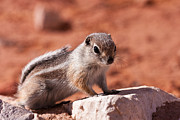 Squirrel Photos - Hopeful Lookout by James Marvin Phelps