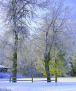 Winter Trees Art - Hoping for Green by Julie Lueders