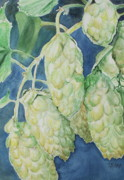 Hops Painting Framed Prints - Hops Framed Print by Sue Ann Glenn