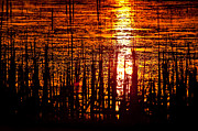 Cattail Photos - Horicon Marsh Sunset Wisconsin by Steve Gadomski