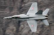 Axalp Prints - Hornet Print by Angel  Tarantella