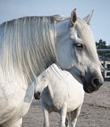 Horse-15 Print by Todd Sherlock