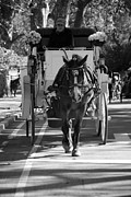 Streetscenes Photos - Horse And Buggy by Rob Hans