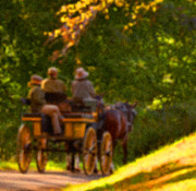 Landscape Photograpy Posters - Horse and Carriage Poster by Bedford Shore Photography