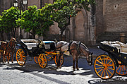 Horse And Carriage Posters - Horse and Carriage Poster by Mary Machare