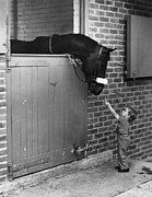 Horse Stable Posters - Horse And Child Poster by Evening Standard