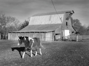 Red Roof Photo Originals - Horse and Home by Arni Katz
