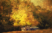 Autumn Photographs Photo Metal Prints - Horse Barn In The Shade Metal Print by Kathy Jennings