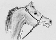 Horse Drawings - Horse Beauty 30 by Gunilla Wachtel