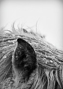 Cold Temperature Art - Horse, Close-up Of Ear And Mane by Vilhjalmur Ingi Vilhjalmsson